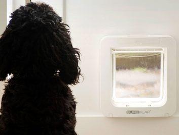 Glas Voit Gmbh - Ab Sofort Bei Uns Sureflap Haustierklappen