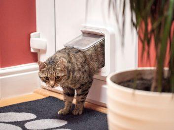 Katzenklappe Connect Mikrochip Gesteuert Von Sureflap