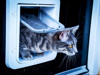 Sureflap_Microchip_Pet_Door_Baloo_Boy_Outside